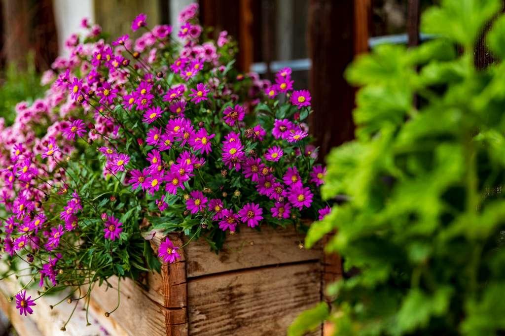 Rosliny Balkonowe Najpopularniejsze Gatunki Na Sloneczny Balkon Debowetarasy Pl