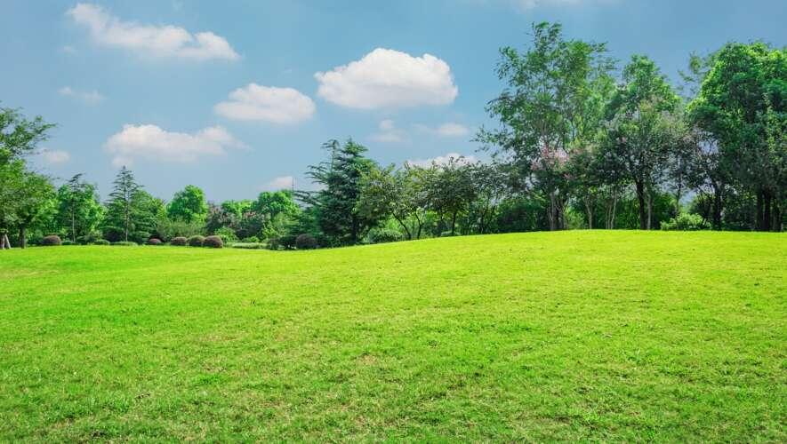 Piękny trawnik - zakładanie trawnika