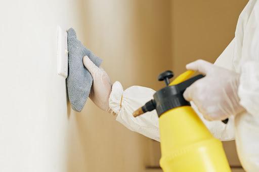 usuwanie grzyba ze ścian